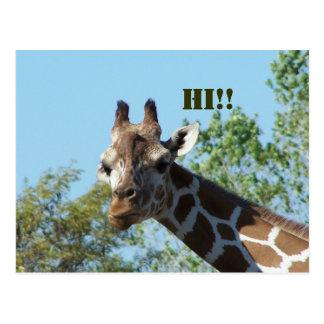 Giraffe, Hi!! Postcard