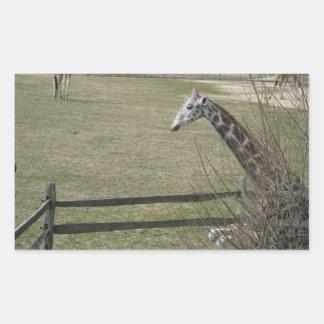 Giraffe hiding in the trees rectangular sticker