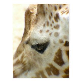 Giraffe I Postcard