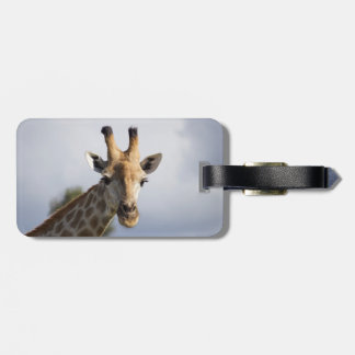 Giraffe in Botswana, Africa, Luggage Tag