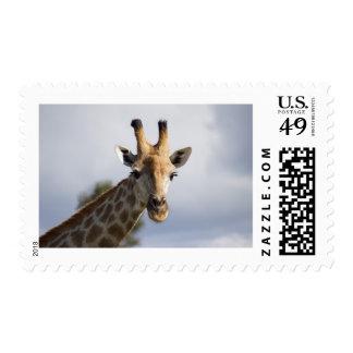 Giraffe in Botswana, Africa, Postage Stamp