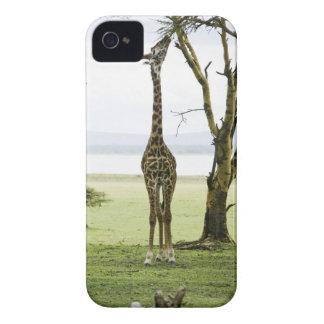 Giraffe in Kenya Africa Case-Mate iPhone 4 Cases