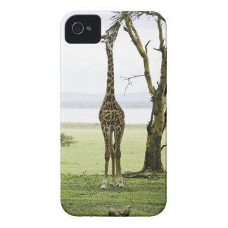 Giraffe in Kenya Africa Blackberry Bold Case