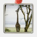 Giraffe in Kenya, Africa Christmas Ornament