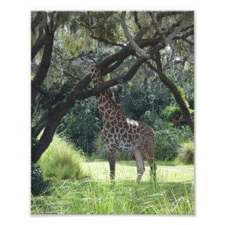 Giraffe in nature photo print