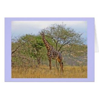 Giraffe in Tanzania Africa