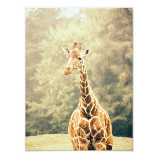 Giraffe In The Rain Photo Art
