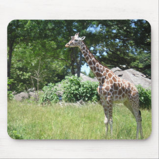 Giraffe in the wild mouse pad