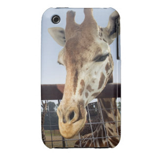 Giraffe iPhone 3 Case-Mate Case