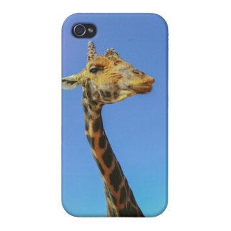 Giraffe iPhone 4/4S Cover