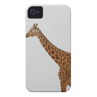Giraffe iPhone 4 Cover