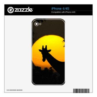 Giraffe iPhone 4 Decal