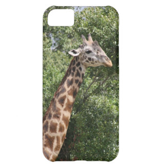 giraffe iPhone 5C covers