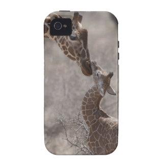 Giraffe Kenya Africa Vibe iPhone 4 Cover
