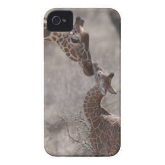 Giraffe Kenya Africa iPhone 4 Cases