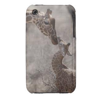 Giraffe, Kenya, Africa iPhone 3 Case