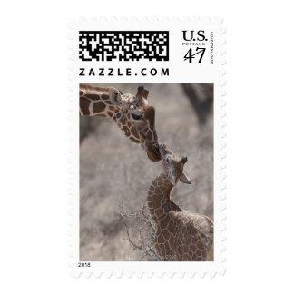 Giraffe, Kenya, Africa Postage