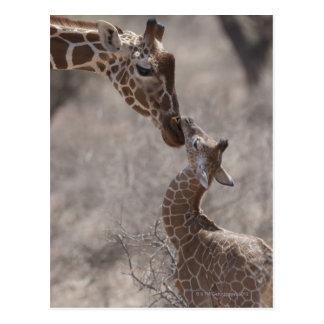 Giraffe, Kenya, Africa Postcard