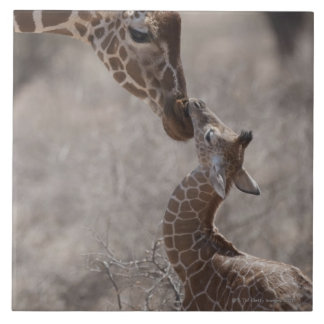 Giraffe, Kenya, Africa Large Square Tile