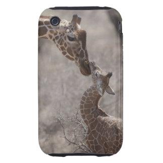 Giraffe, Kenya, Africa Tough iPhone 3 Covers