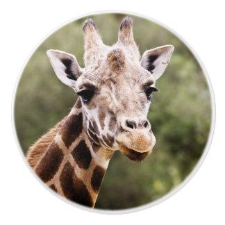 Giraffe knob ceramic knob