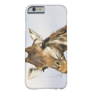 Giraffe, Kruger National Park, South Africa Barely There iPhone 6 Case