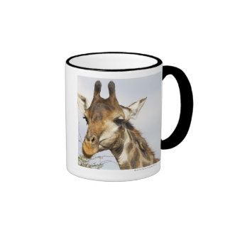 Giraffe, Kruger National Park, South Africa Ringer Coffee Mug