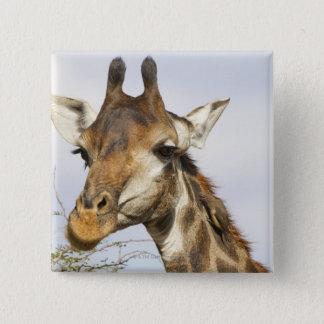 Giraffe, Kruger National Park, South Africa Pinback Button