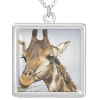 Giraffe, Kruger National Park, South Africa Silver Plated Necklace