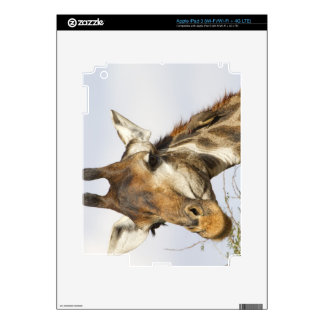 Giraffe, Kruger National Park, South Africa iPad 3 Decals