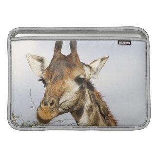 Giraffe, Kruger National Park, South Africa Sleeve For MacBook Air