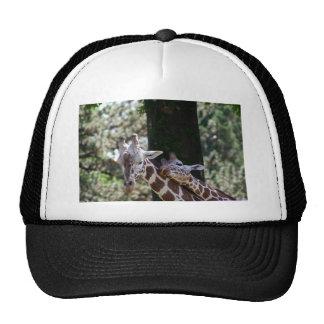 Giraffe Love Mesh Hats
