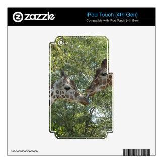 Giraffe Love Skins For iPod Touch 4G