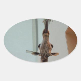 Giraffe, luckier than Marius; model 1 Oval Sticker