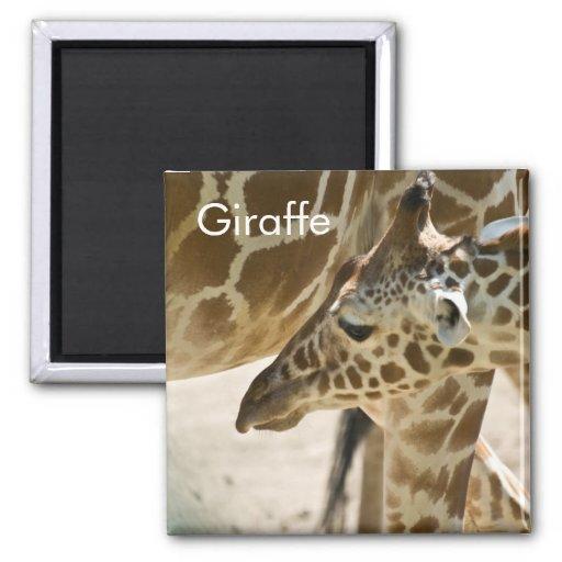 Giraffe • Magnet