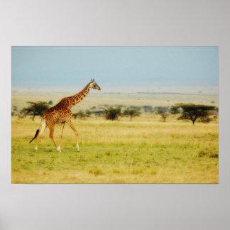 Giraffe Masai Mara, Kenya poster, print, picture