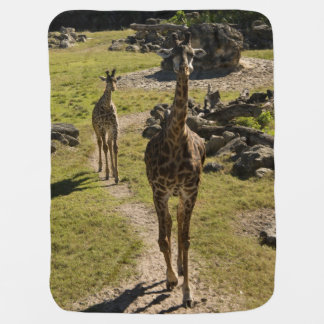 Giraffe Mom and Baby Calf Baby Blanket