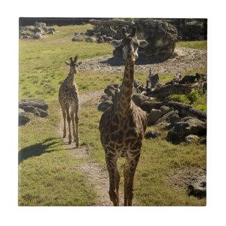 Giraffe Mom and Baby Calf Ceramic Tile