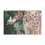 Giraffe mom and baby Poster Gallery Wrapped Canvas