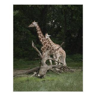 Giraffe Mother and Calf Art Photo
