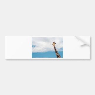 Giraffe neck and head against the clear blue sky bumper sticker