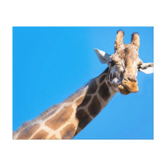 Giraffe neck and head canvas print