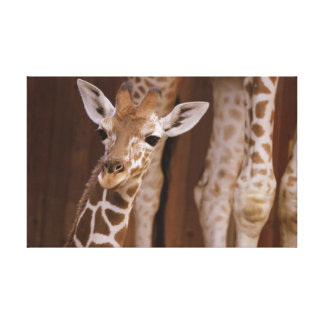 Giraffe on canvas