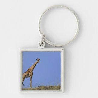Giraffe, on ridge against blue sky, Giraffa Keychain