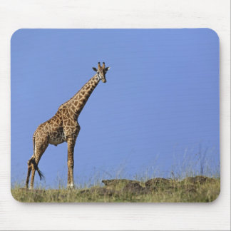 Giraffe, on ridge against blue sky, Giraffa Mouse Pad