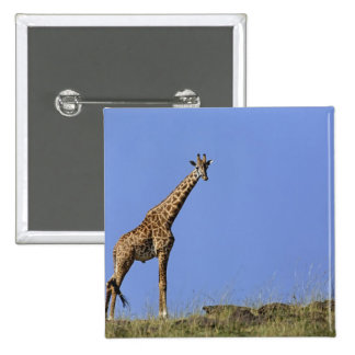 Giraffe, on ridge against blue sky, Giraffa Pinback Button