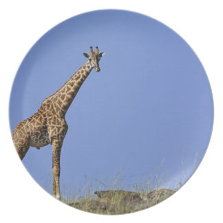 Giraffe, on ridge against blue sky, Giraffa Dinner Plates