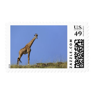 Giraffe, on ridge against blue sky, Giraffa Postage Stamp