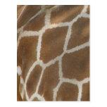 Giraffe Patterned Postcard