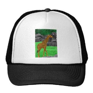 Giraffe photo colorized orange and green mesh hats